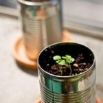 Basil-in-tin-can-planters