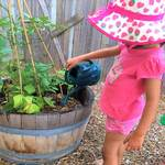 At Jacobs ELC we like to focus strongly on sustainability and 'Being Green' we encourage children to explore the enviroment and do their part in helping to grow their own fruit and veg which is also used in our home made foods. This experience connects to the EYLF Learning Outcome 2: Children are connected with and contribute to their world.